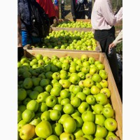 Продаю польские яблоки высшего сорта