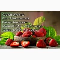 Продажа Клубники, Черешни, Малины, Ежемалины, Смородины