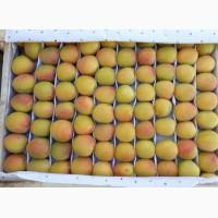 Продам клубнику, абрикосы и черешню из Узбекистана Урожай 2018