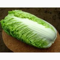 Продам пекинскую капусту от производителя