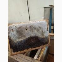 Горный чистый натуральный лекарственный мёд