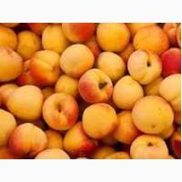 Заготовим Иссык Кульские абрикосы
