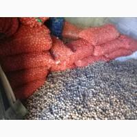 Продажа греческих орехов оптом