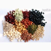 Продам фасоль разных сортов
