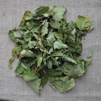Продам сухие листья черной смородины