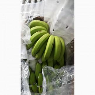 Бананы для продажи