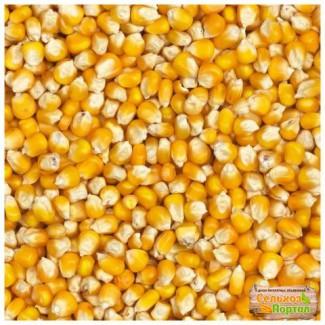 Продаем семена гибридов кукурузы урожая 2017 года, с одним протравителем витовакс 200