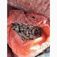 Продам сушоный грибы сушоный