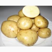 Продам семена картофеля сорта Сантэ супер элита