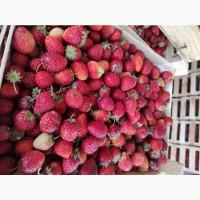 Заготовка сезонной ягоды Киргизии ( клубника, ежевика, смородина, вишня )