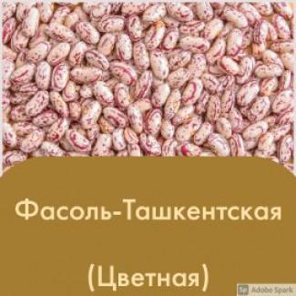 Элитная Фасоль Ташкентский (2020)