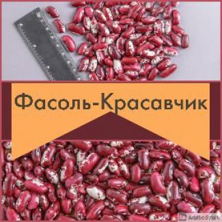 Элитная Фасоль Красавчик