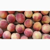 Продаю органические персики