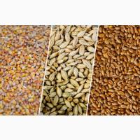 Продаем оптом зерновые культуры Казахстана