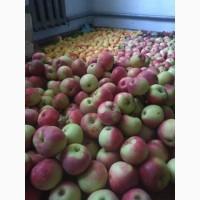 Яблока Грушы